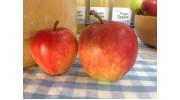 Apples Saturn per pack of 5