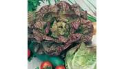 Lettuce - red merveille